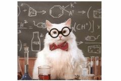 Cat-likes-science