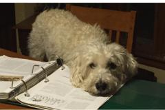 Dog-on-binder