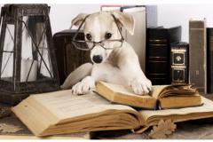 Dog-studying-books