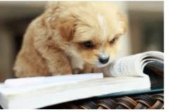 Puppy-book-1