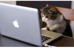 Kitten-on-laptop