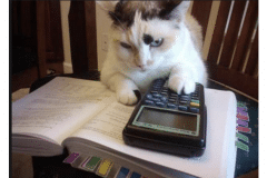 Kitten-with-calculator