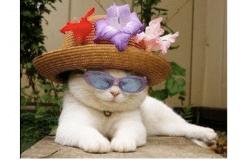 Wear-hat-on-Fridays